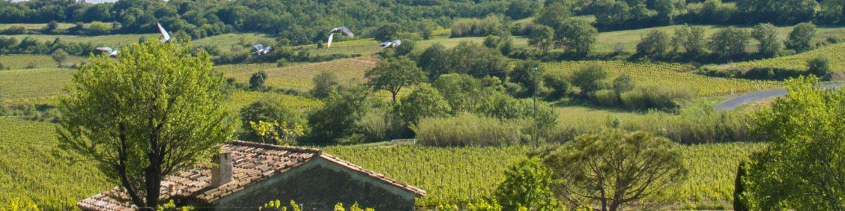 Pique Nique chez Le Vigneron – Vignerons Indépendants
