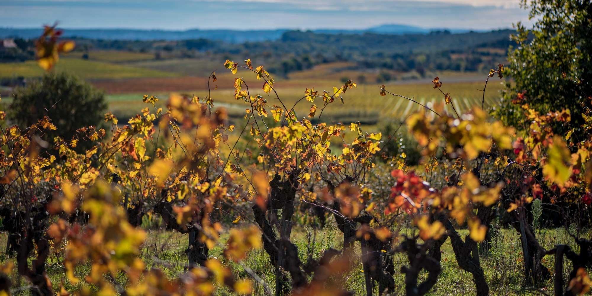vigne-automne-pezenas-basalte