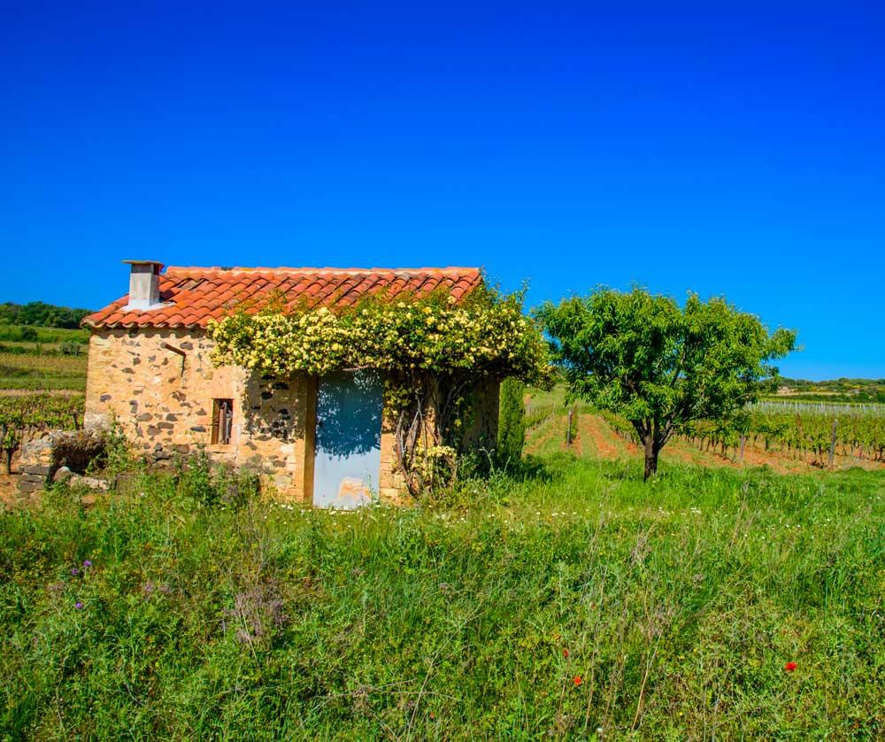 balade de mazet en mazet dans les vignes